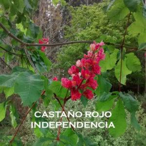 Castaño Rojo-Independencia