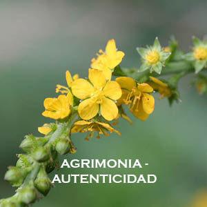 Agrimonia-Autenticidad. Versión Cristal