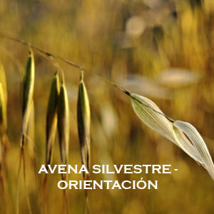 Avena Silvestre-Orientación. Versión Cristal