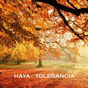 Haya-Tolerancia. Versión Cristal