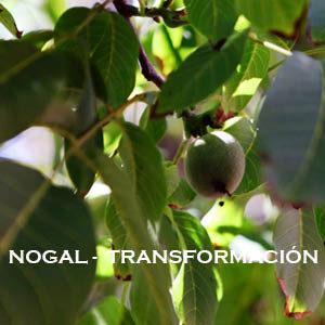 Nogal-Transformación. Versión Cristal