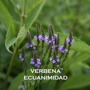 Verbena-Ecuanimidad